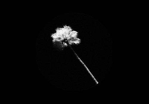 Black Atlass - HAUNTED PARADISE