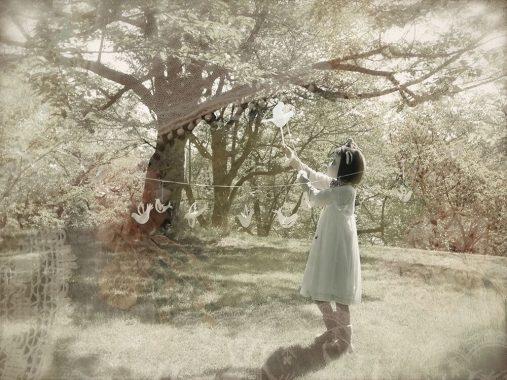 木目鳥 - Mokumedori